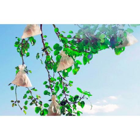 Bolsas protección melocotones y árboles frutales