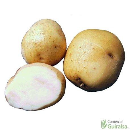 Patata de siembra Kennebec 35/55 Certificada