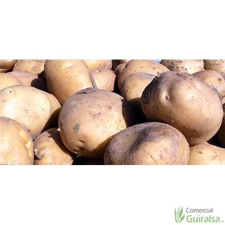 Patata de siembra Jaerla 35/55 Certificada Saco 25 kg