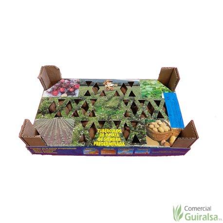 Caja Semillas Patata Kennebeck Certificada Pregerminada