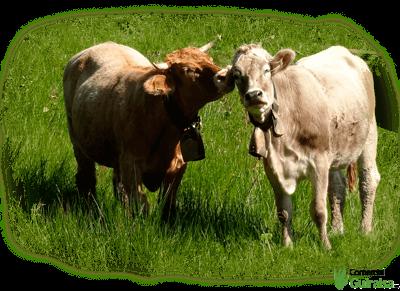 Bloques de mineral de sal para vacuno, ovino, caprino y equino - Guiralsa