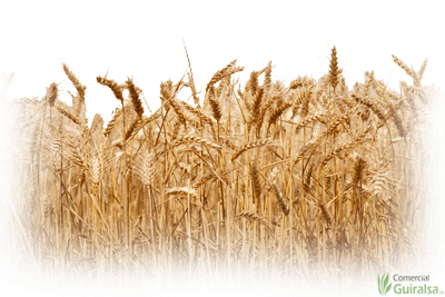 Materia prima como trigo, cebada, maiz, avena...