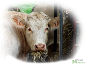 Pienso para animales como vacas, caballos, ovejas, gallinas...