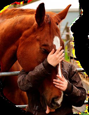 Pienso para caballos Guiralsa